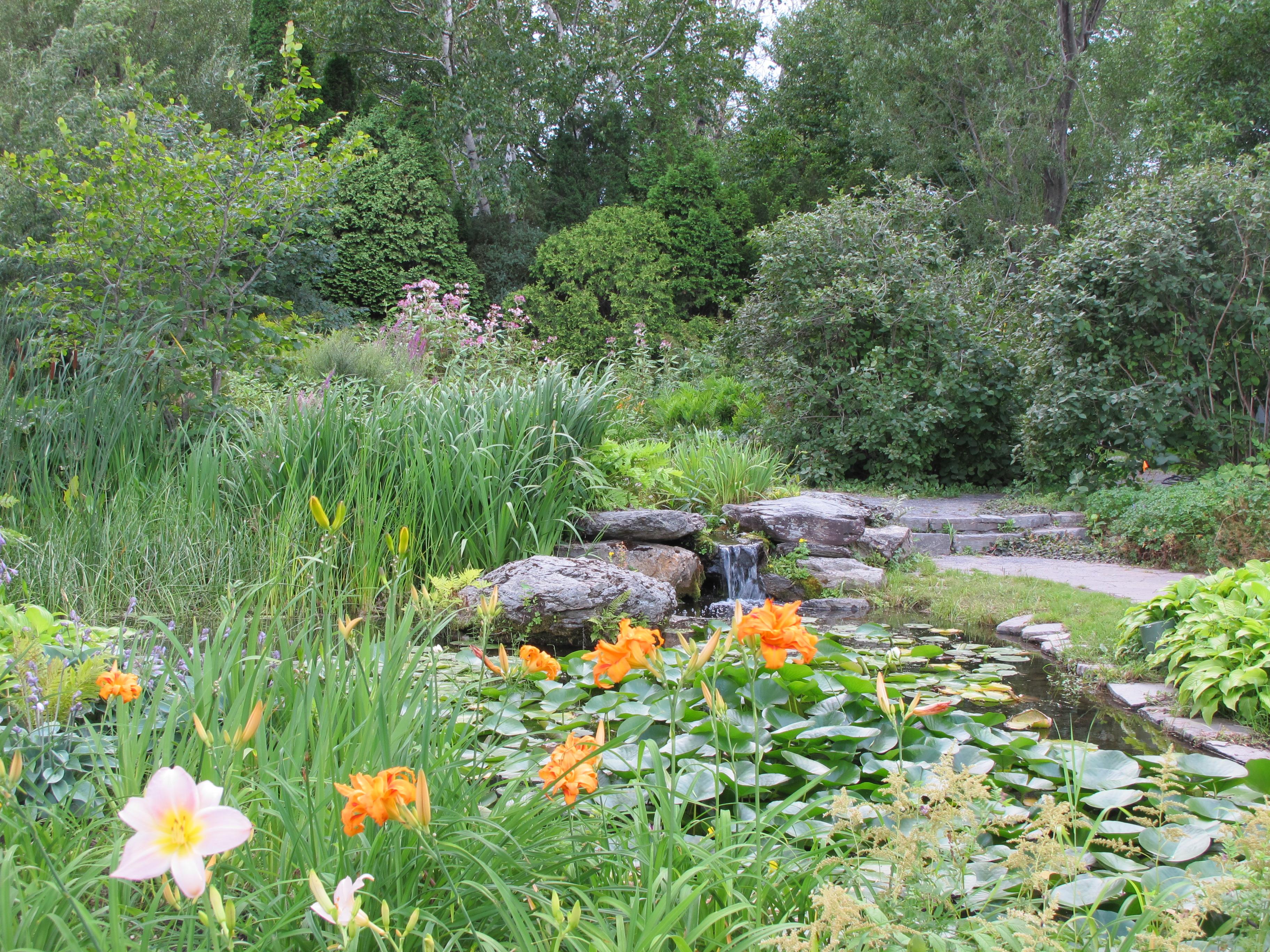 dans mon jardin avec larry hodgson quelques termes de botanique. Black Bedroom Furniture Sets. Home Design Ideas