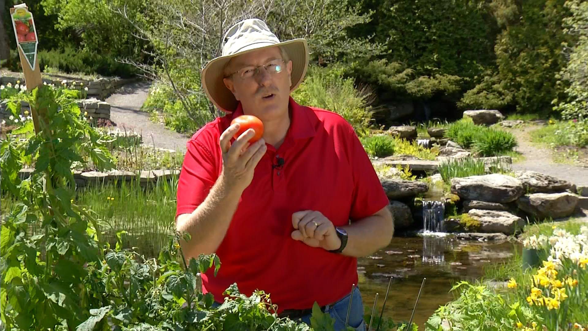 Dans mon jardin avec larry hodgson tout sur les tomates - Dans mon jardin d hiver ...
