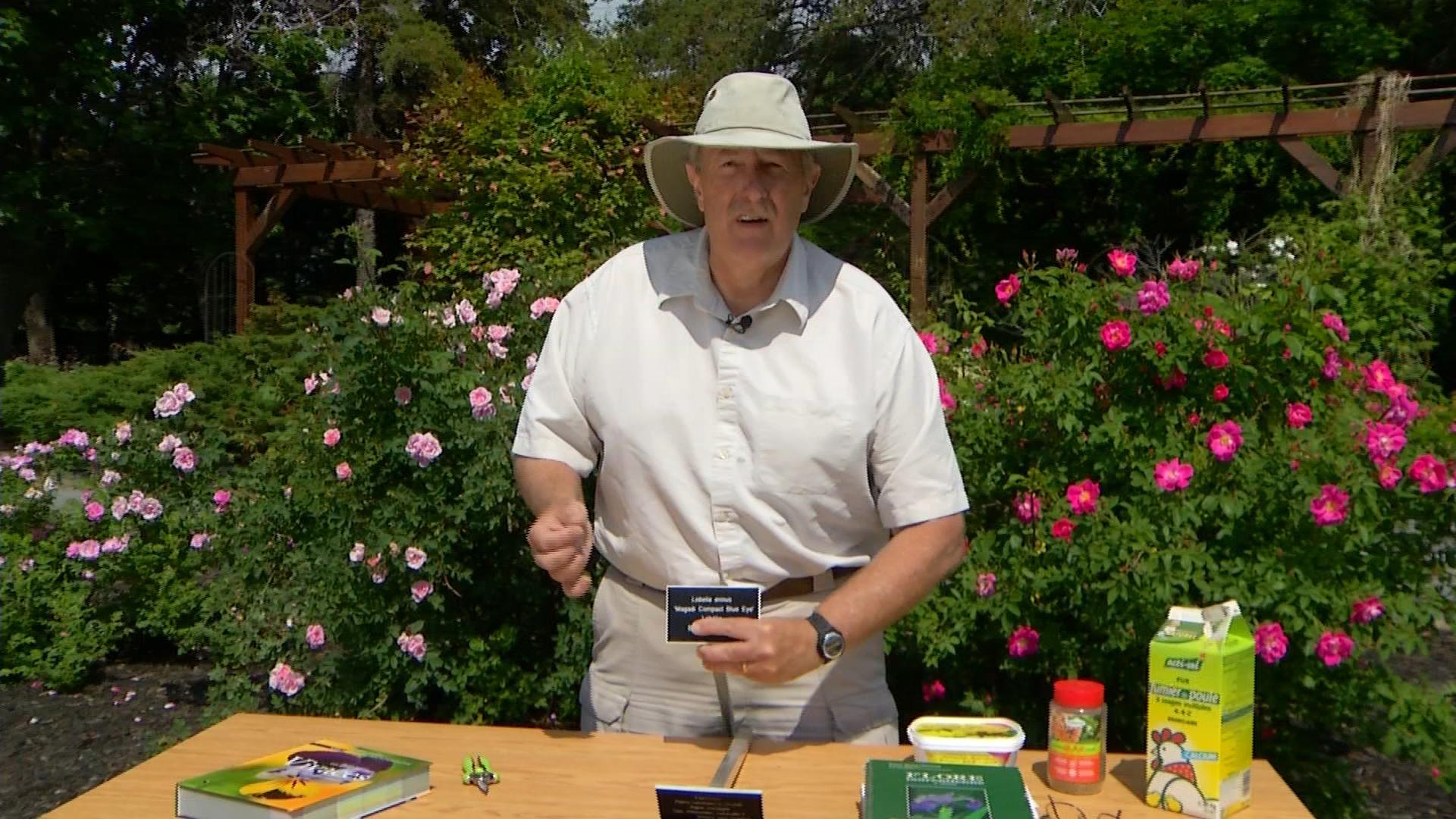 Dans mon jardin avec larry hodgson quelques termes de botanique - Camping dans son jardin ...