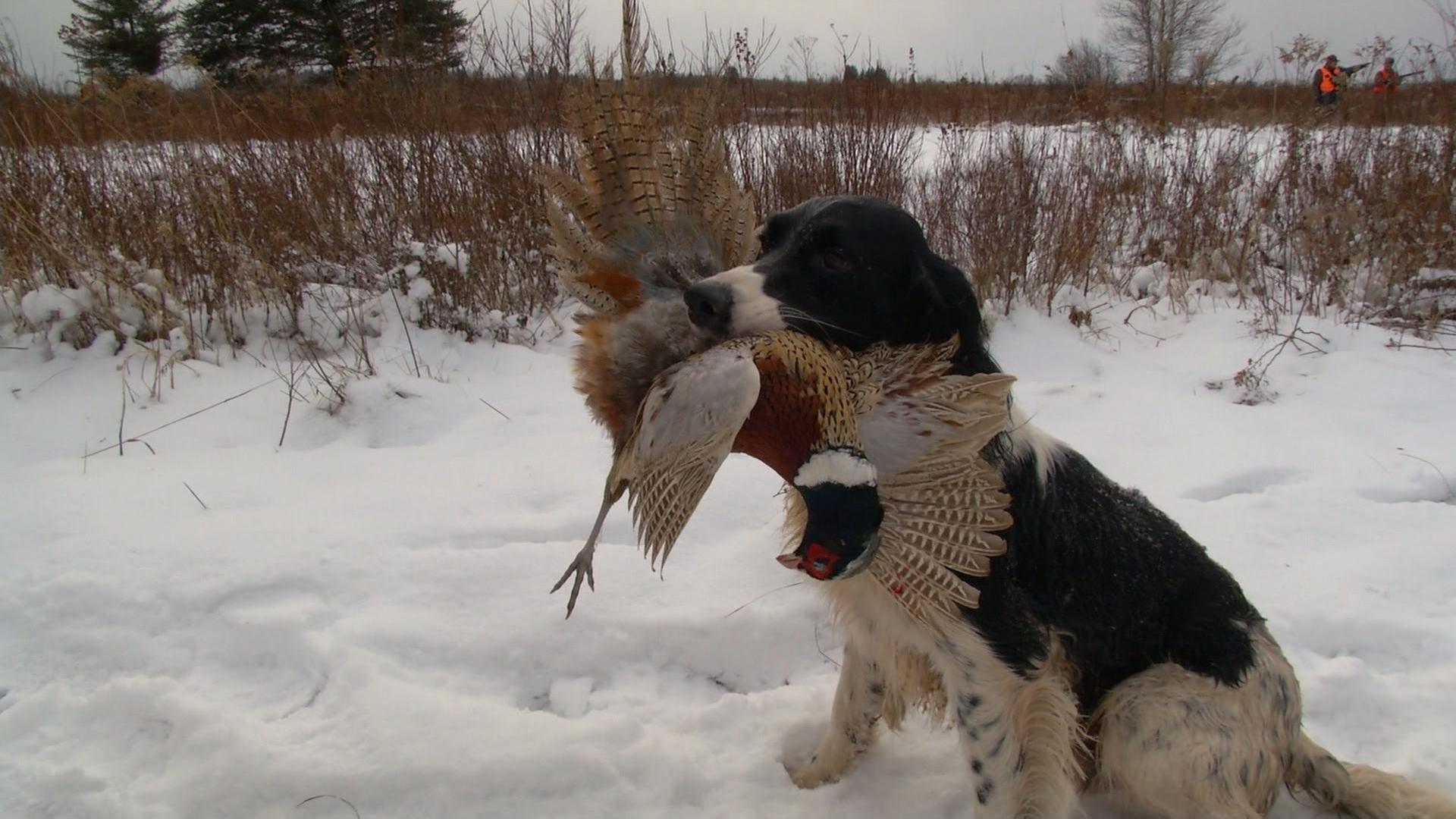 Regarder sur la pêche la chasse du carassin et les cordages